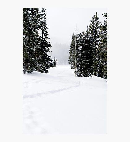 Snowshoe Trail Photographic Print