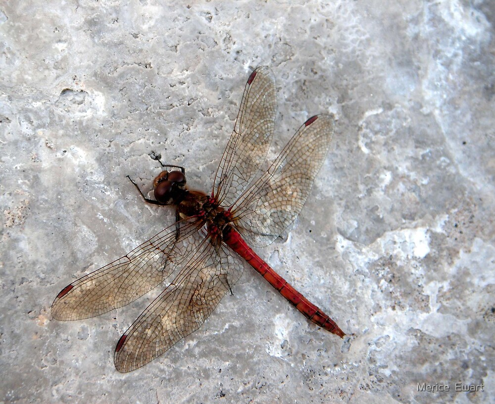 Dragonfly on harbour wall by technochick