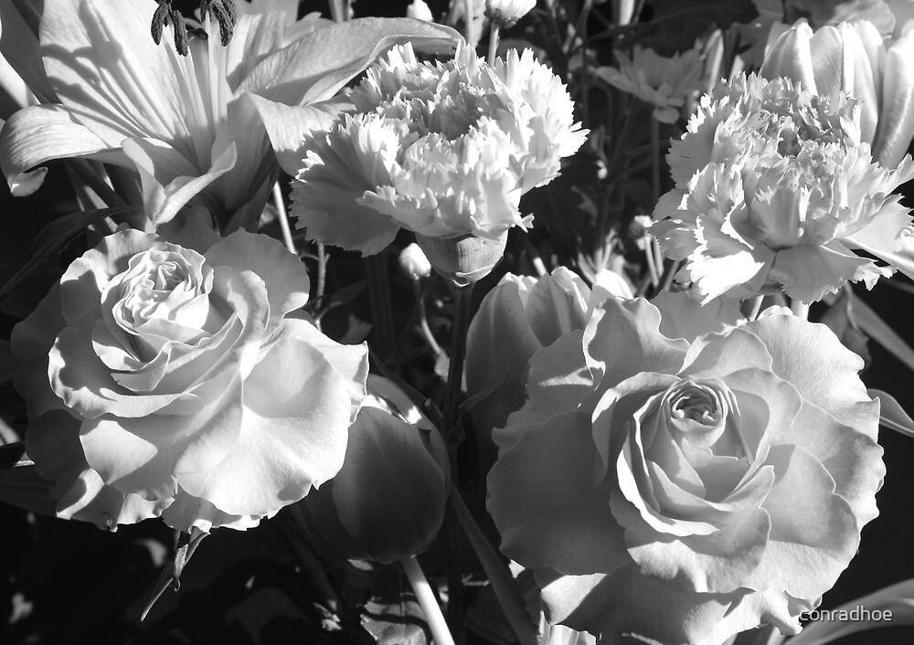 Mono Flowers by conradhoe