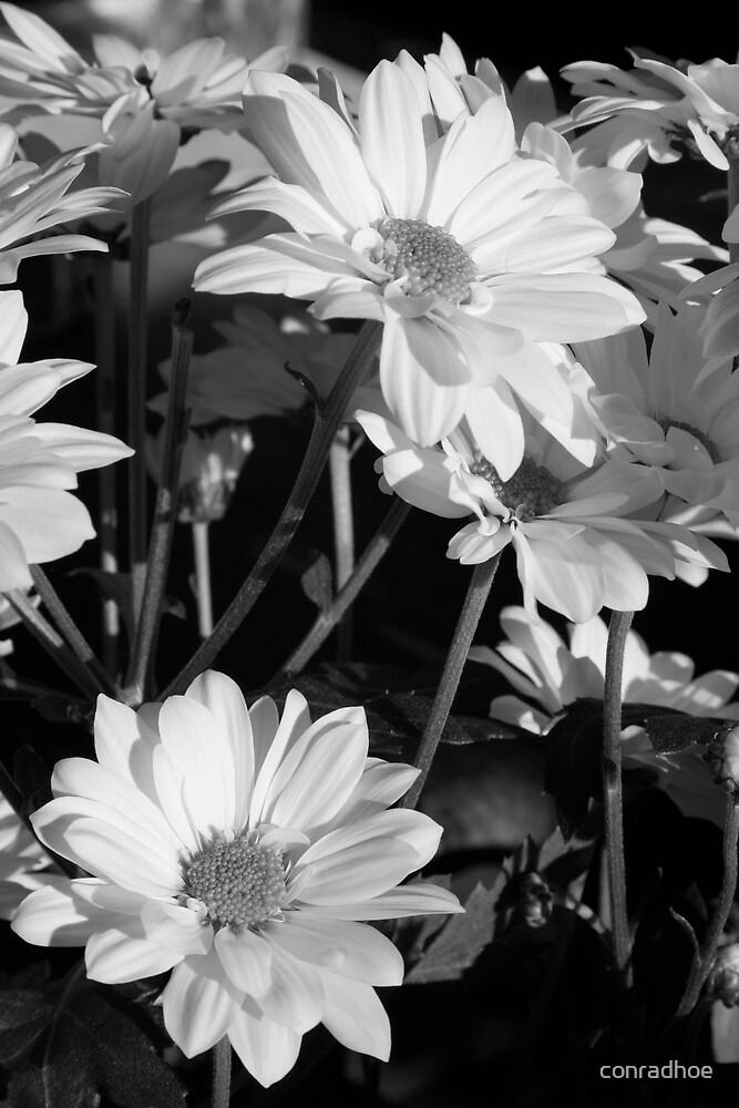 Mono Flowers 2 by conradhoe