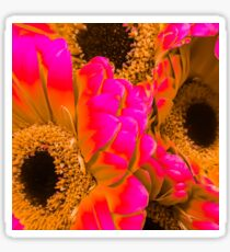 Gerber Daisies with a Twist Sticker