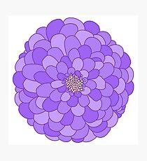 Purple Flower Photographic Print