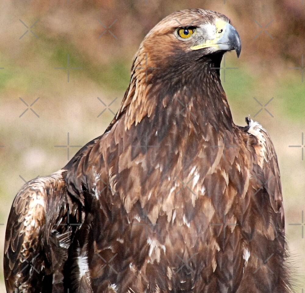 Eagle eye by nitelite