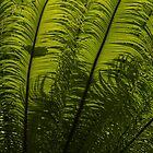 Tropical Green Rhythms - Feathery Fern Fronds - Horizontal View Upwards Right by Georgia Mizuleva