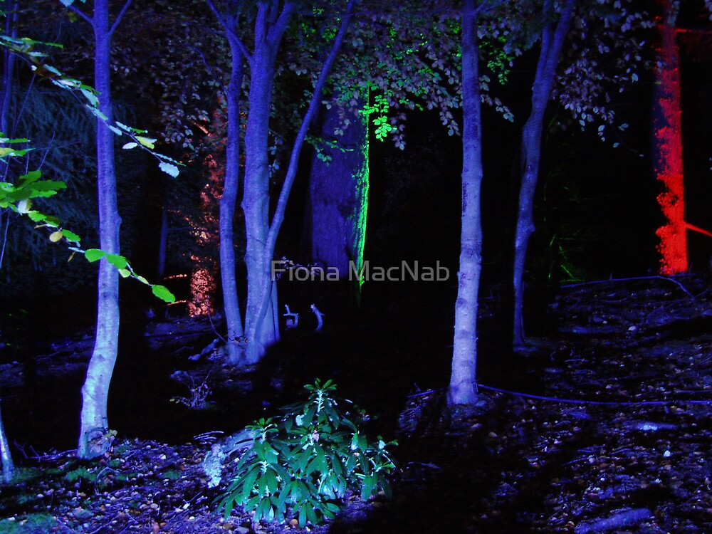 The Enchanted Forest by Fiona MacNab
