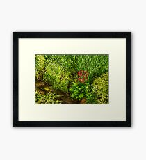 Impressions of Gardens - a Miniature Spring Creek with a Red Primrose  Framed Print