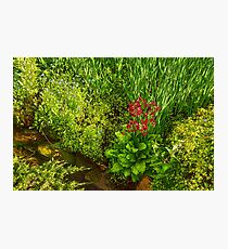 Impressions of Gardens - a Miniature Spring Creek with a Red Primrose  Photographic Print