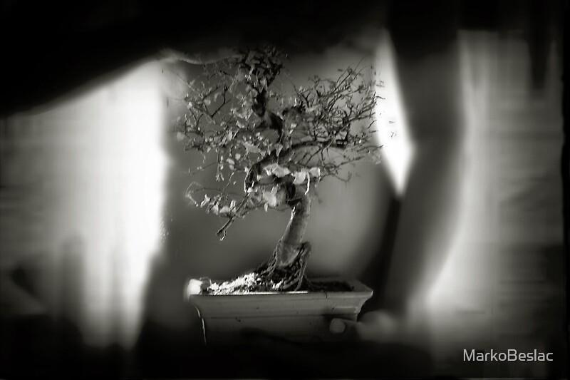 Sorry for bonsai by MarkoBeslac
