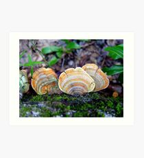 Unidentified Fungi on Oak (Orange/Green) Art Print