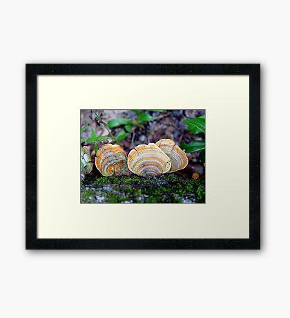 Unidentified Fungi on Oak (Orange/Green) Framed Print