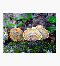Unidentified Fungi on Oak (Orange/Green) Photographic Print