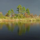 The Five Pines before the Storm by May Lattanzio