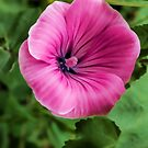 Early Summer Blooms Impressions – Bright Pink Malva Vertical by Georgia Mizuleva