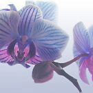 Purple Orchid by Justine Butler - daisybluesky.co.uk Tel: 07969 444962