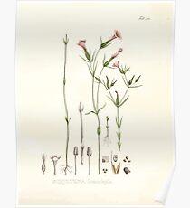 Nova genera et species plantarum V1 V3 Plates Karl Friedrich Philipp von Martius 1834 185 Poster