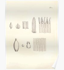 Nova genera et species plantarum V1 V3 Plates Karl Friedrich Philipp von Martius 1834 140 Poster