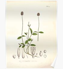 Nova genera et species plantarum V1 V3 Plates Karl Friedrich Philipp von Martius 1834 132 Poster
