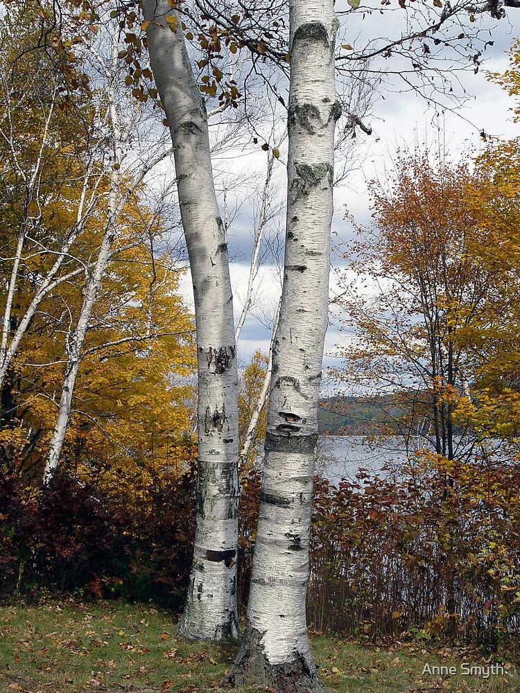 Birches by Anne Smyth