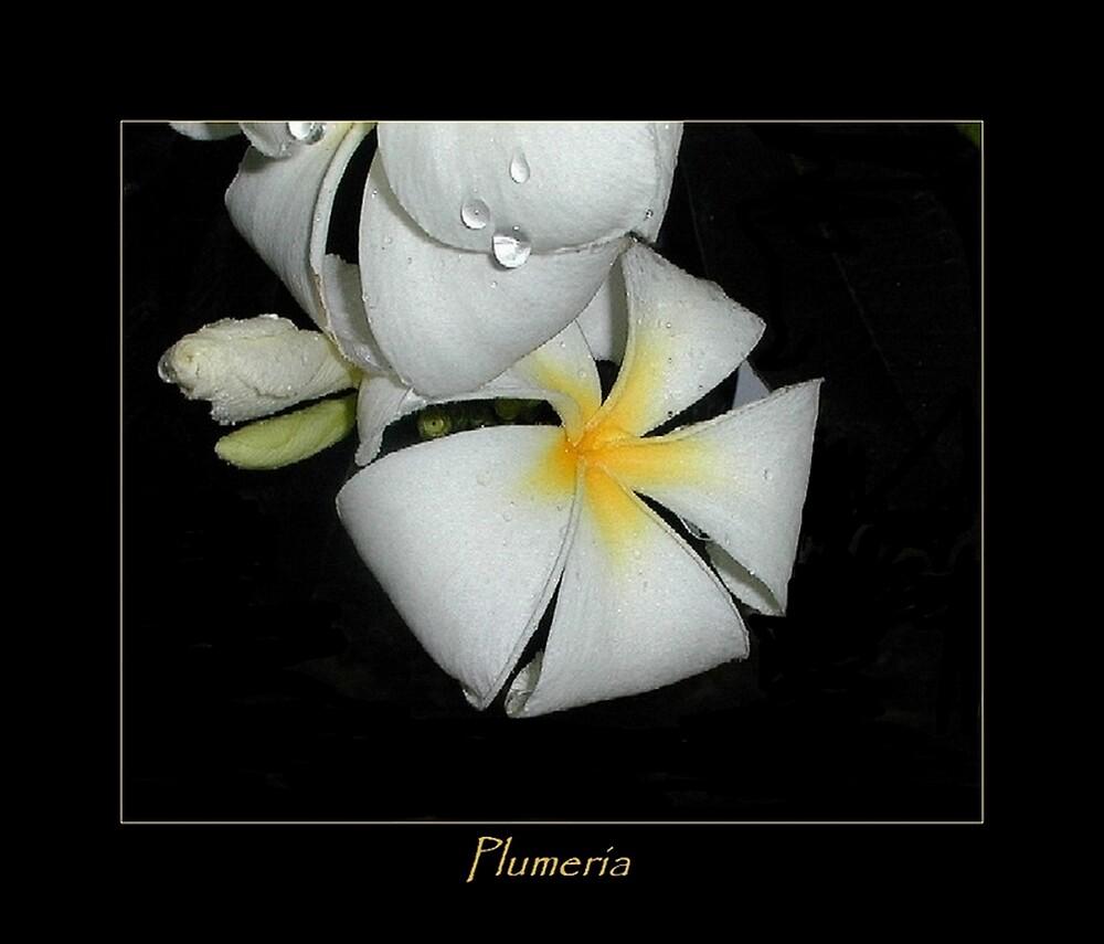 Plumeria2 by Kathryn Eve Rycroft