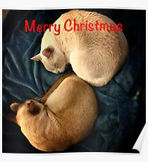 Merry Christmas Kittens Poster