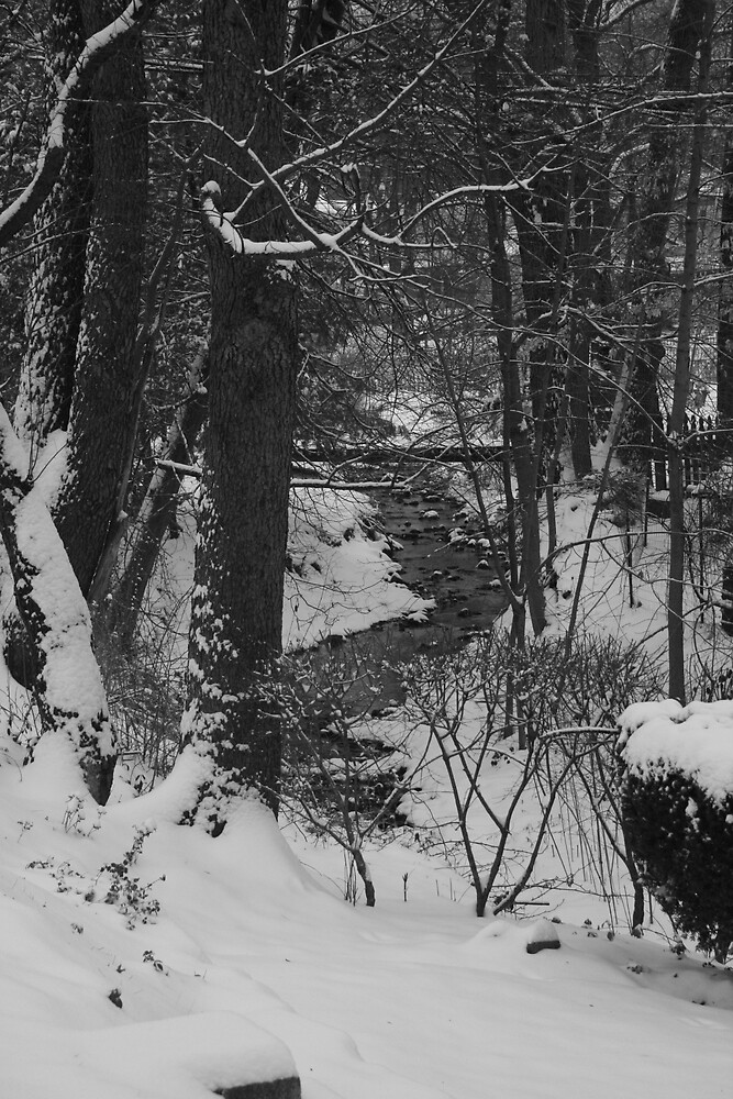 Creek by Gabrielle Gigliotti