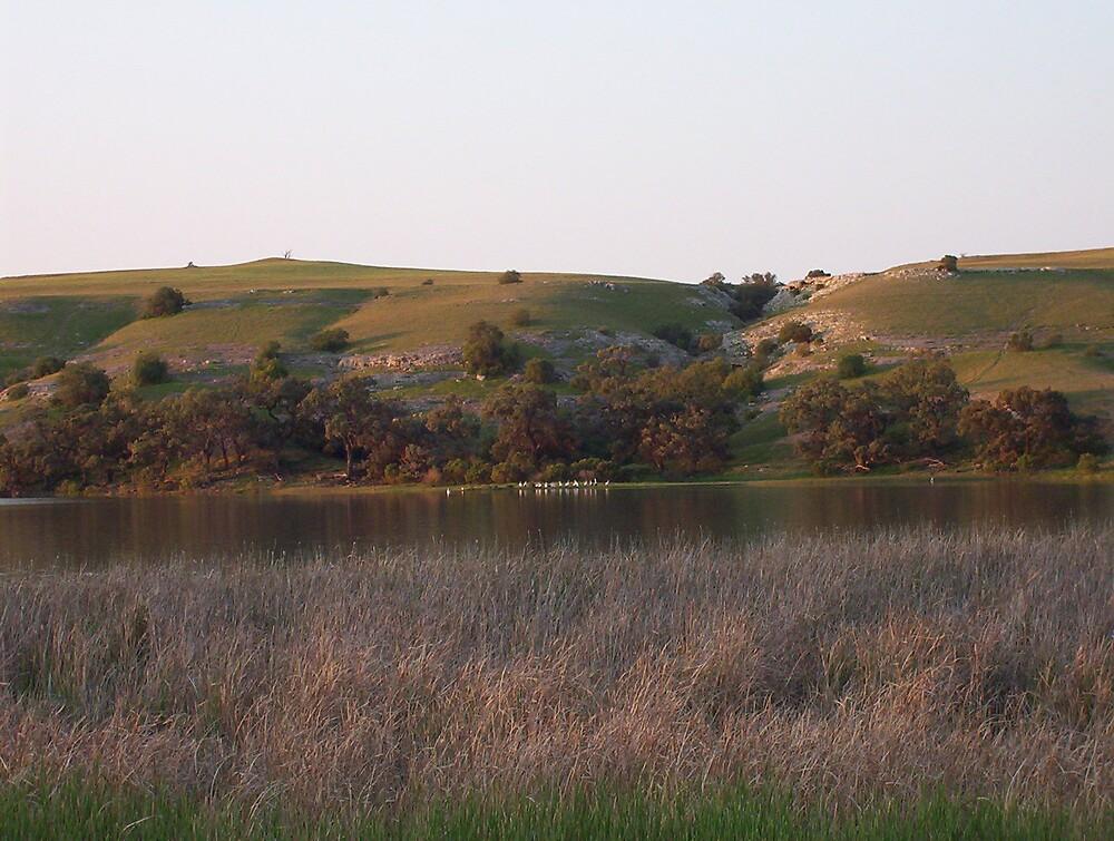 Dusk, overlooking a lagoon near Bow Hill on the Murray River by Juliashmoolia
