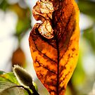 Autumn Leaf by Evita
