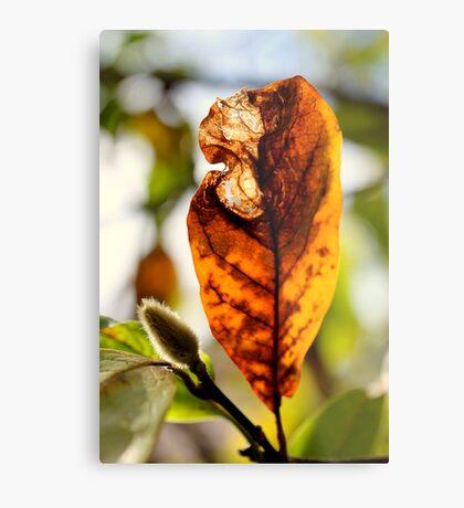 Herbstblatt Metalldruck