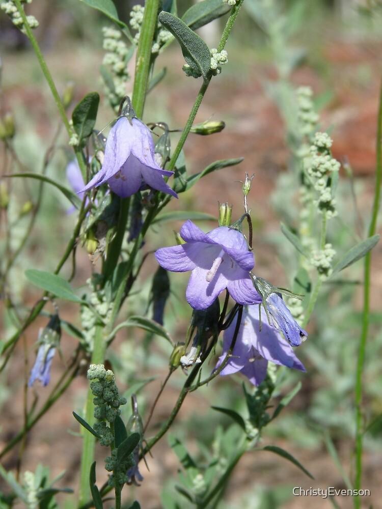 Colorado Wildflowers by ChristyEvenson