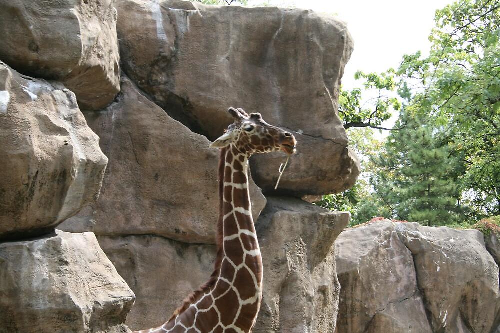 Giraffee by Gabrielle Gigliotti