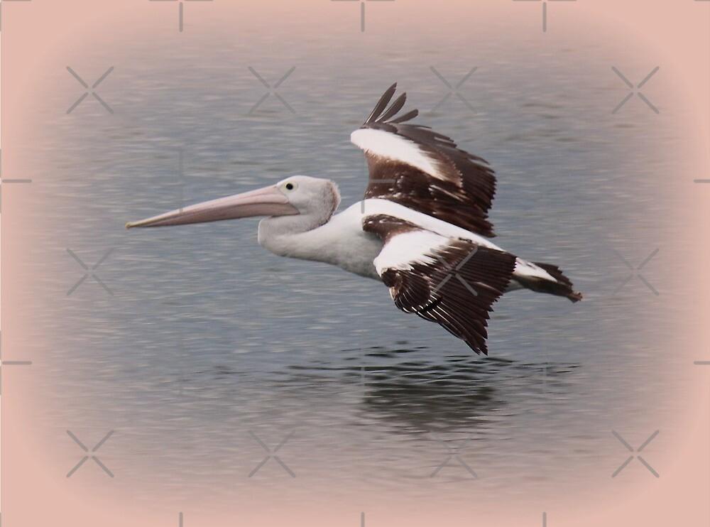Pelican by Louise Linossi Telfer