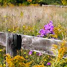 Posterized barn, fence and field by Chet Scerra