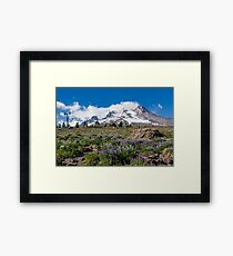 Mt Hood and lupines from Pacific Crest Trail Framed Print