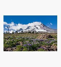 Mt Hood and lupines from Pacific Crest Trail Photographic Print