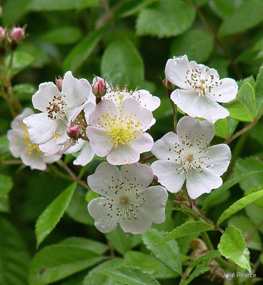 Blackberry Blooms Galore by Julié Pearce