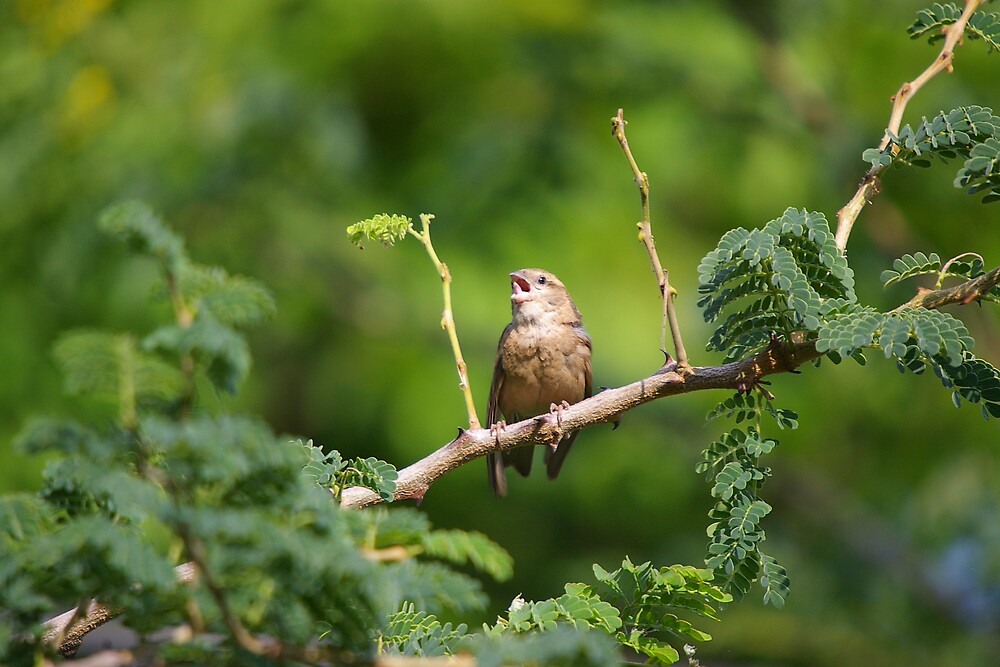 Calling all Birds by Deidre Cripwell