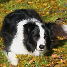 Ollie in autumn colours........!! by Roy  Massicks
