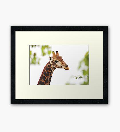 THE MATURED GIRAFFE Framed Print