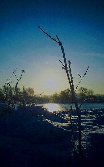 ice moon by dnlddean