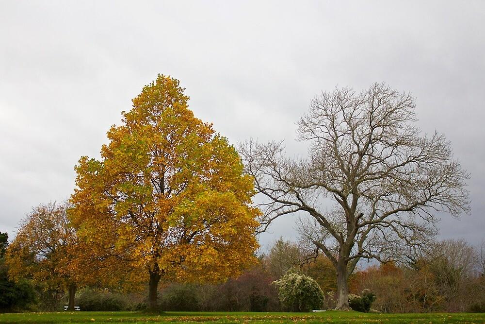 Autumn contrast by UnivPhoto