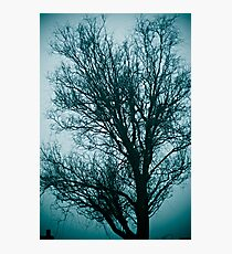 blue willow Photographic Print