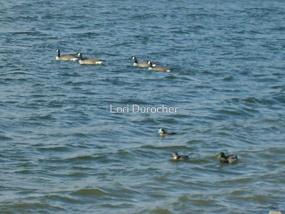 Were the Ducks Go by Lori Durocher