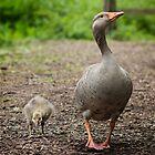 Goose and her Gosling by Sara Sadler