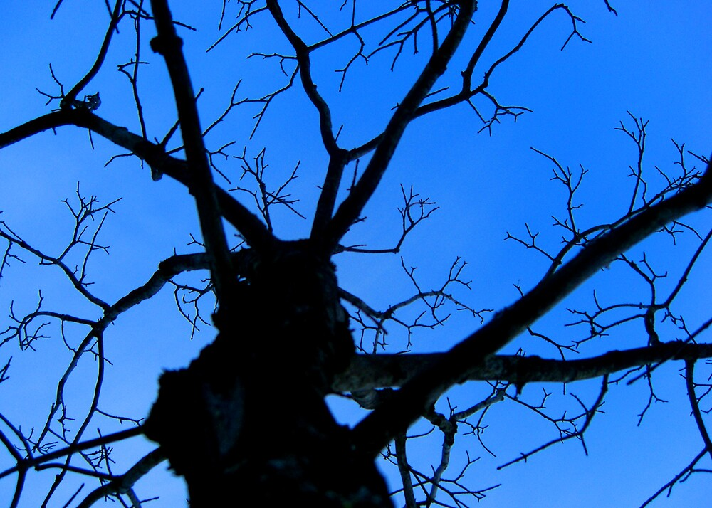 Silhouette of a Blue Mourning by kathleend