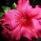 *Azalea/AVATAR - Gorgeous Flower Cards - Challenge*