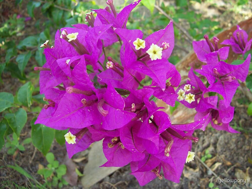 flowers by yellowpony