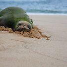 Sleepy Seal by Dan Jesperson