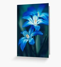 Small Blue Flowers Greeting Card