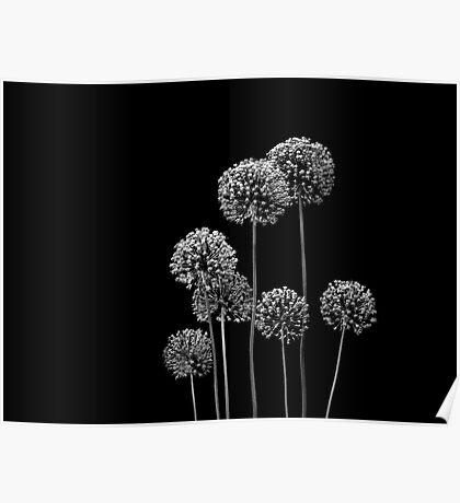 Allium Array Poster