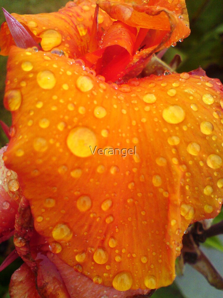 Rain Droplets on Orange Beauty by Verangel